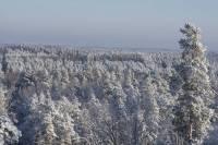"""Dabas parka """"Ogres Zilie kalni"""" distanču slēpošanas trase sagatavota ziemas prieku baudīšanai"""