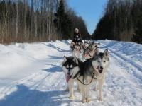 Dodies izbraucienā ar sniega suņu pajūgu!