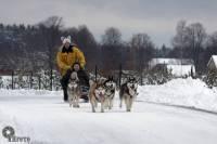 Vizināšana suņu pajūgos